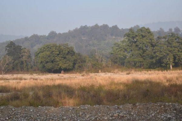 Bijrani jungle
